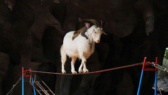 可爱的小狗, 欣赏完动物的绝技,中国传统节目——杂技表演