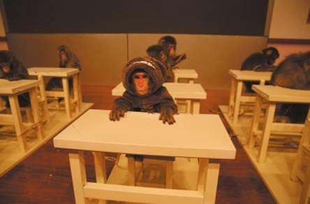 史上最萌真猴剧情表演秀《萌猴学院》登陆沈阳 门票限时免费抢