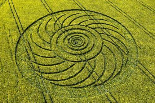 英国南部麦田怪圈频发 可带来数百万收入(图)