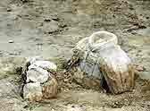 6月10日部分试挖出的陶俑