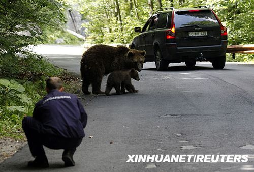 棕熊宝宝图片_徐州三胞胎小熊清明亮相彭祖园组图_江苏新