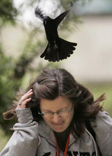美国一只母鸽为保护幼鸽疯狂袭击路人(组图)