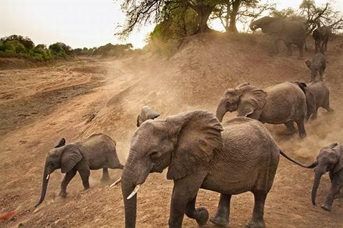 科学家发现6000万年前大象祖先 像兔子般大小