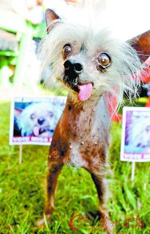 世界最丑的狗 -  汏儀 - 天下無不散之宴席