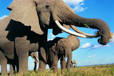 考古新论:恐龙灭绝带来大象的繁荣(图)