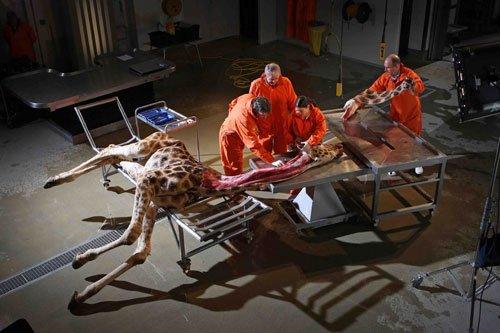 科学家解剖大型动物尸体