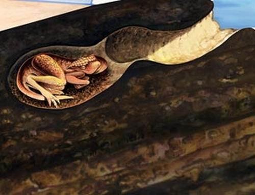 澳洲发现古老恐龙洞穴 棱齿龙冬季打地洞御寒
