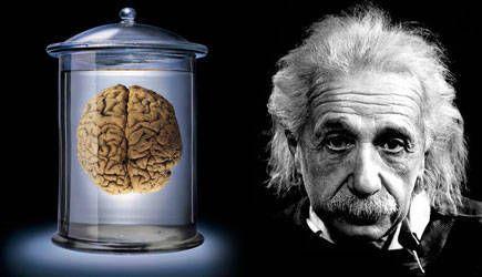 50年谜案:爱因斯坦大脑里究竟隐藏了什么?