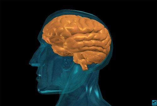 人类脑袋不断变大之谜:社会竞争所致(图)