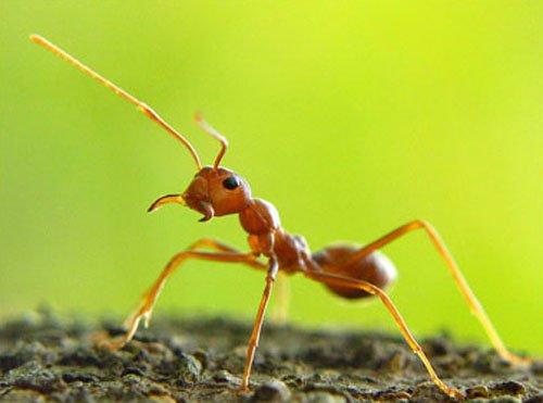 """昆虫大脑被真菌寄生:恐怖的""""蚂蚁坟墓"""""""
