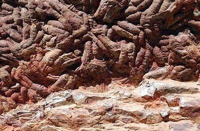 西班牙发现四亿年前身长约1米的巨虫足迹(图)