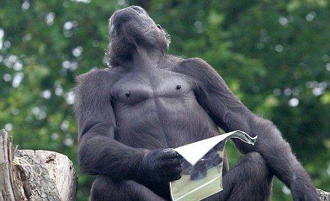 """组图:动物园帮大猩猩举行别样""""相亲会""""_动物世界_科技"""