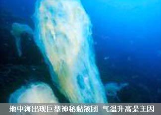地中海出现巨型神秘黏液团