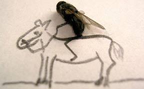 """""""天才""""无处不在 牛人用死苍蝇作画"""
