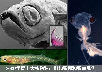 2009年度十大新物种