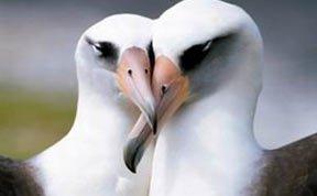 自然界6种同性恋动物