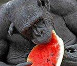 年度奇趣动物图片