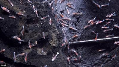 科学家首次拍摄到海底火山喷发壮观景象(图)