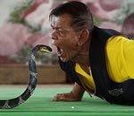 农民吞食眼镜王蛇