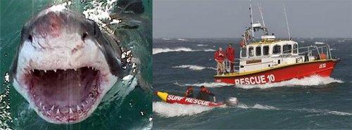 南非海滩发生惨剧 鲨鱼瞬间咬死游客(图)