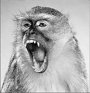 """猴子也会尊敬老者 懂礼貌聆听""""长辈教诲"""""""