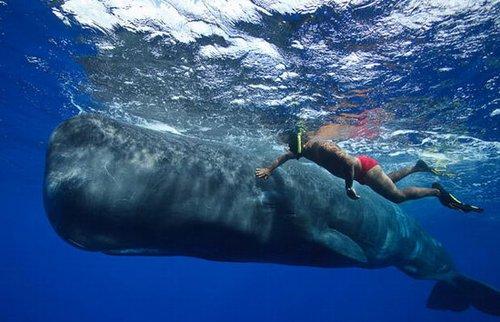 组图:鲸语者带你走进抹香鲸的奇妙世界
