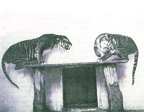 盘点40年来11大灭绝动物 金蟾蜍居首(组图)