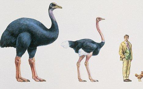 科学家拟从灭绝鸟蛋壳提取DNA 复活远古巨鸟 - 雨星 - 雨星