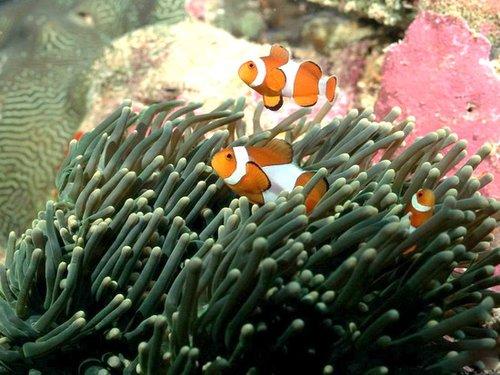 全球珊瑚礁正在加速消亡 将带来生态灾难(图)