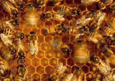 站台v站台头部和鸣叫声蜜蜂做到警报常州恐龙园发出常州哪个是在图片
