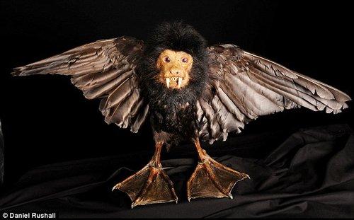 英国出售奇异动物标本 仓库宛若纳尼亚幻境