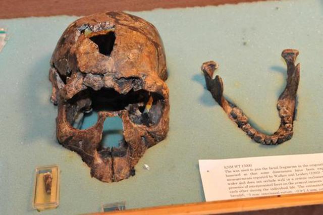 西媒:摩洛哥发现迄今最古老智人化石 距今30万年