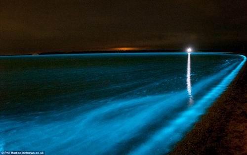 罕见!澳洲发现夜光湖 游泳者全身出现蓝色荧光