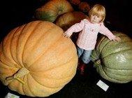 打破世界纪录的巨型蔬菜