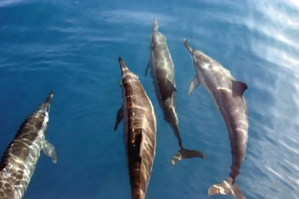 海洋动物怎么睡觉呢?鱼类睡觉好比人类打个盹儿