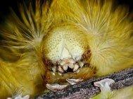 自然界十大怪异昆虫