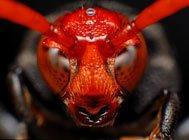 昆虫X档案