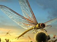 全球10大巨型昆虫盘点