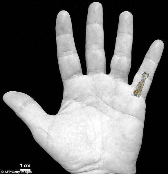 非洲发现185万年前神秘巨人指骨