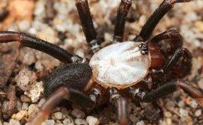 人类首次发现奇特白化蜘蛛