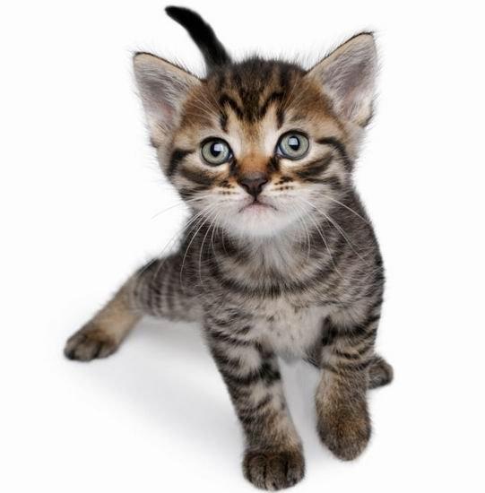 英报告称下一代致命疾病可能来自于家庭宠物