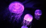 自然界十大发光生物