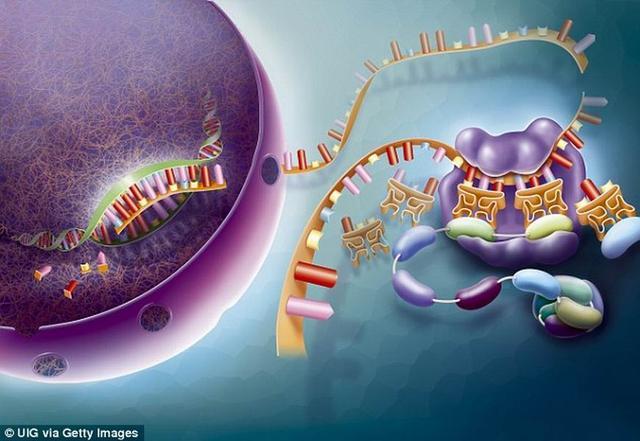 """实验表明""""原生汤""""增稠将加速早期生命进化"""