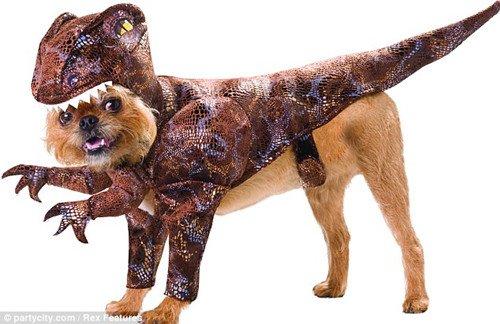 宠物新装扮变身恐龙 服装轻便不影响运动(图)