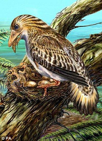 研究表明早期鸟类进化出羽毛并非为了飞行