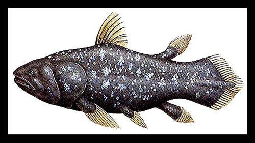 """云南发现最早""""解剖学意义上的空棘鱼""""化石"""