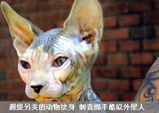 超另类的动物纹身