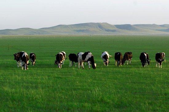马云等20亿投资伊利牧场开养奶牛 将获60%股权