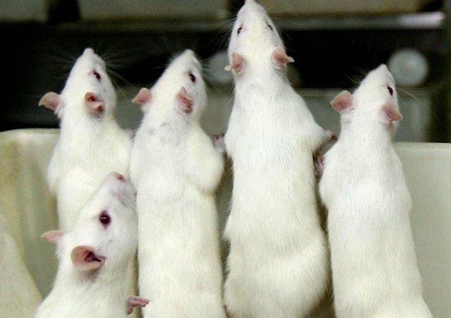 """科学家从遗传角度揭开""""嗜酒成性""""之谜"""