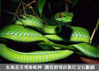 东南亚发现新型蛇种